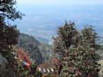 A view from above ofDharamsala